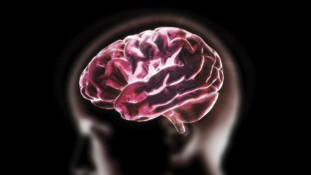 160713_tl530_cerveau-humain_sn635